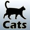 猫とペット