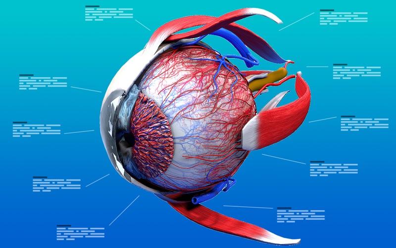 Eye Anatomy 3D скриншот программы 1
