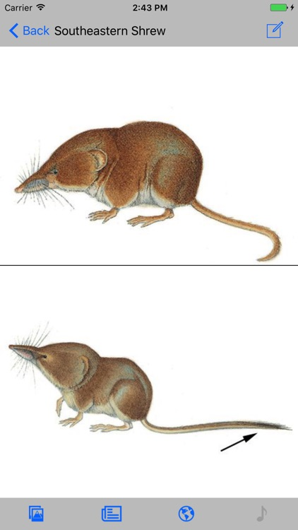 Mammals of North America screenshot-4