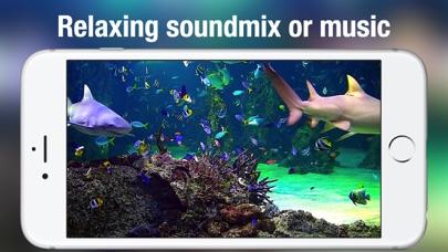 Screenshot #10 for Aquarium Live HD