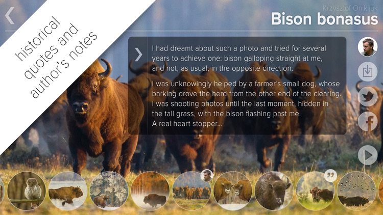 Bison bonasus screenshot-3