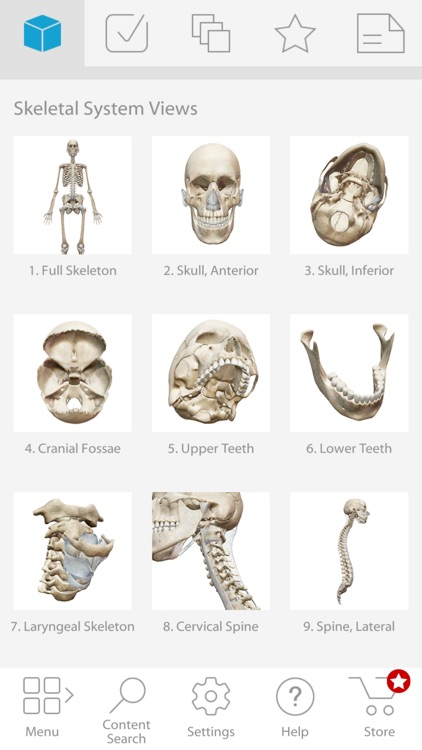 Skeleton Anatomy Atlas: Essential Reference screenshot-4