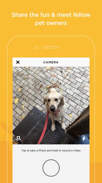 Petcube screenshot-5