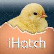 Ihatch Chickens app review