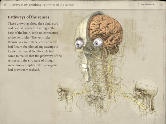 Leonardo human anatomy