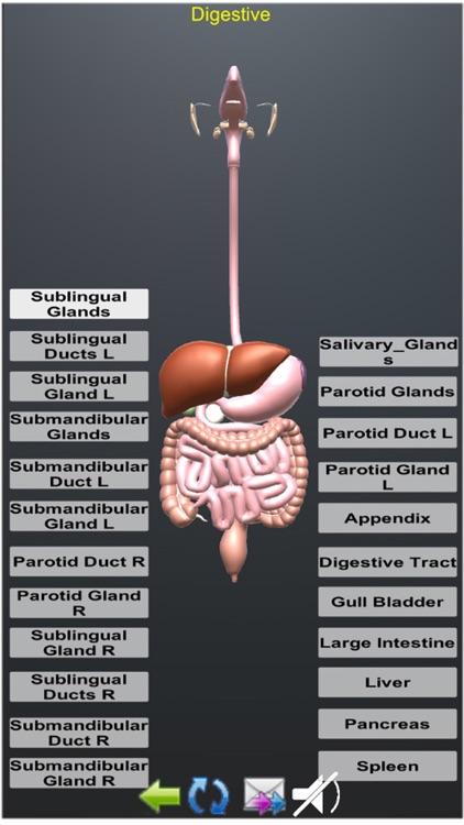 Human Anatomy Encyclopedia 3D screenshot-8