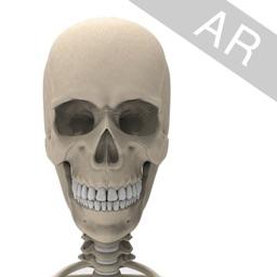 Virtual Skeleton