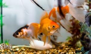 Fantastic Aquarium