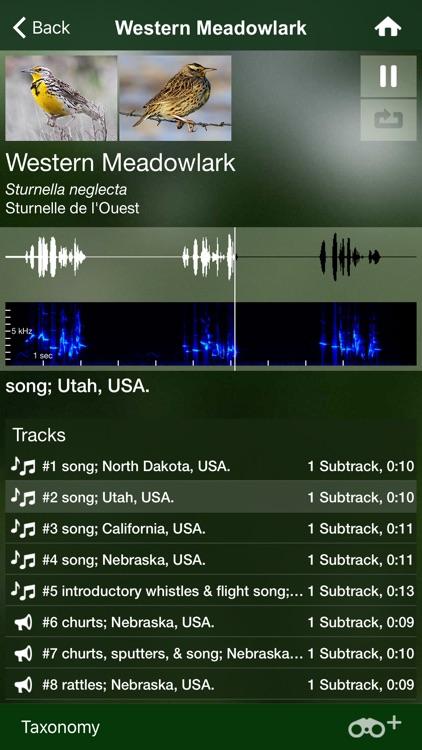 Bird Songs USA & Canada (3100) screenshot-3