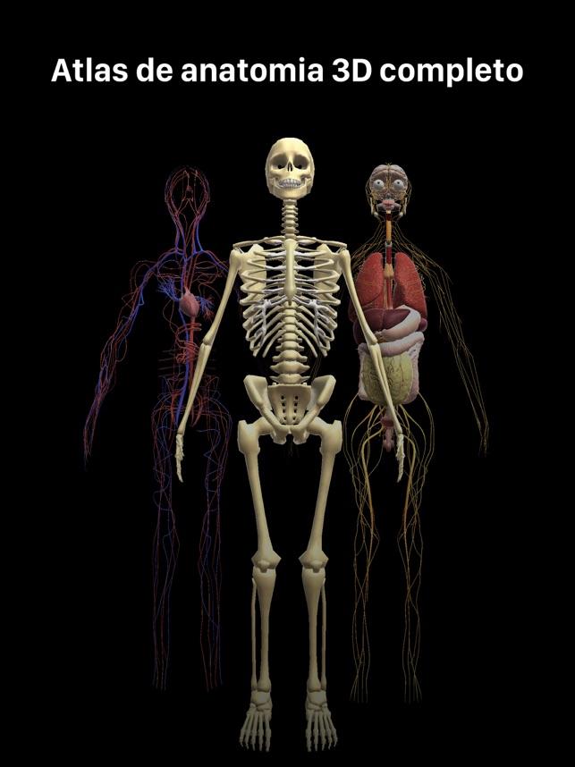 Excelente Anatomía 3d En Línea Bandera - Imágenes de Anatomía Humana ...