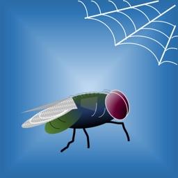 Fly vs Spider