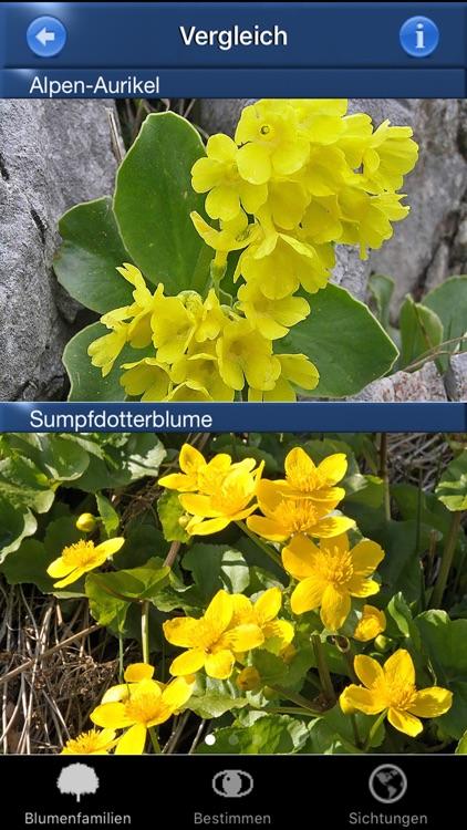 Alpenblumen Id Automatik Blumen, Kräuter bestimmen