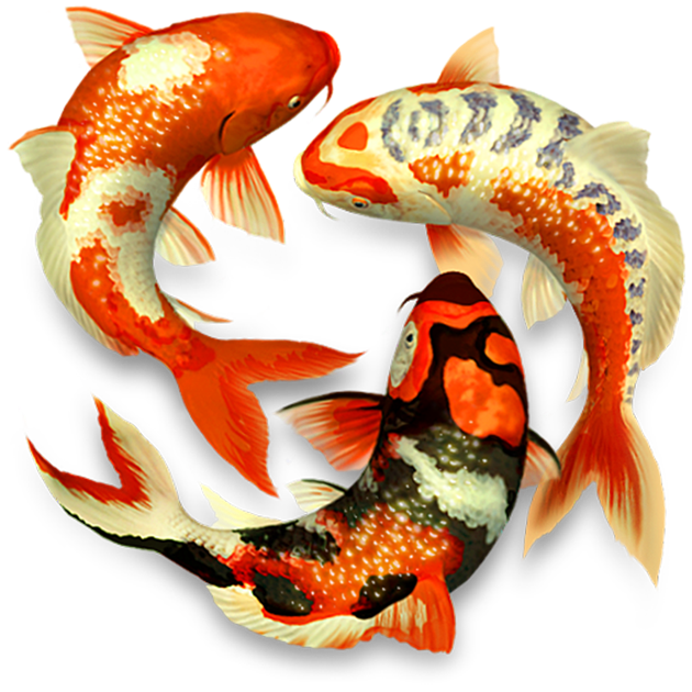 koi pond 3d on the mac app store