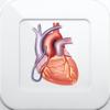 心臓と冠動脈疾患