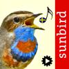 Mullen & Pohland GbR - Fågelsång Id  - automatisk identifiering av fåglar artwork