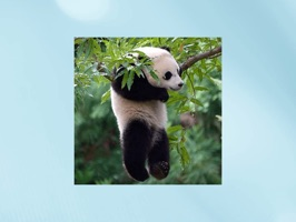 Now you can react to your friend's conversations with your favourite Funny Lazy Panda Stickers