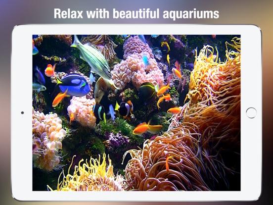 Screenshot #3 for Aquarium Live HD