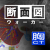 断面図ウォーカー胸部CT-Ryo Matsuda