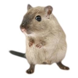 Hamster Photo Sticker