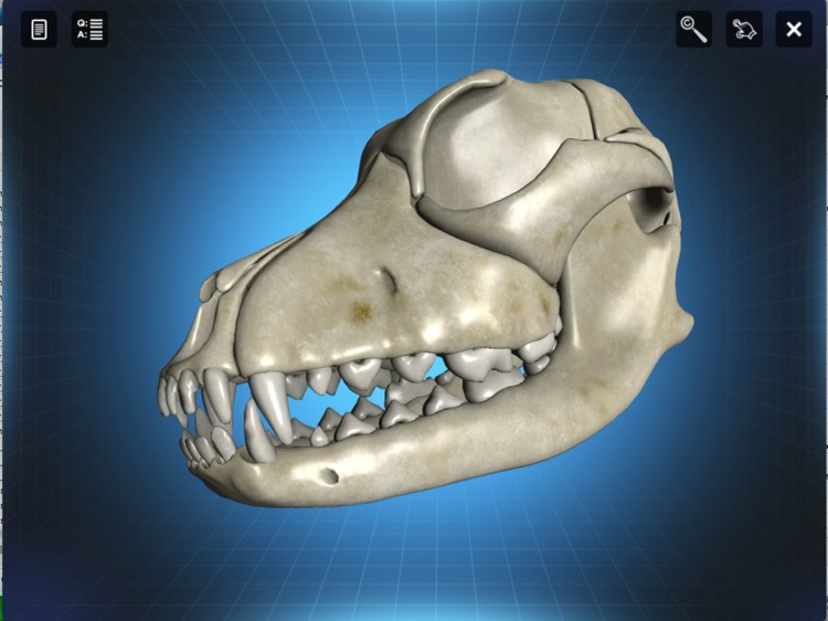 Bone Viewer - Dog Skull screenshot-4