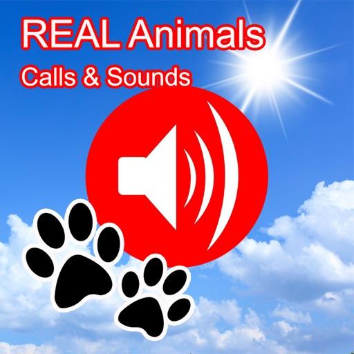 REAL Animals Hunting Calls