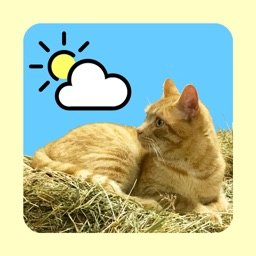 WeatherCatRCP Apple Watch App