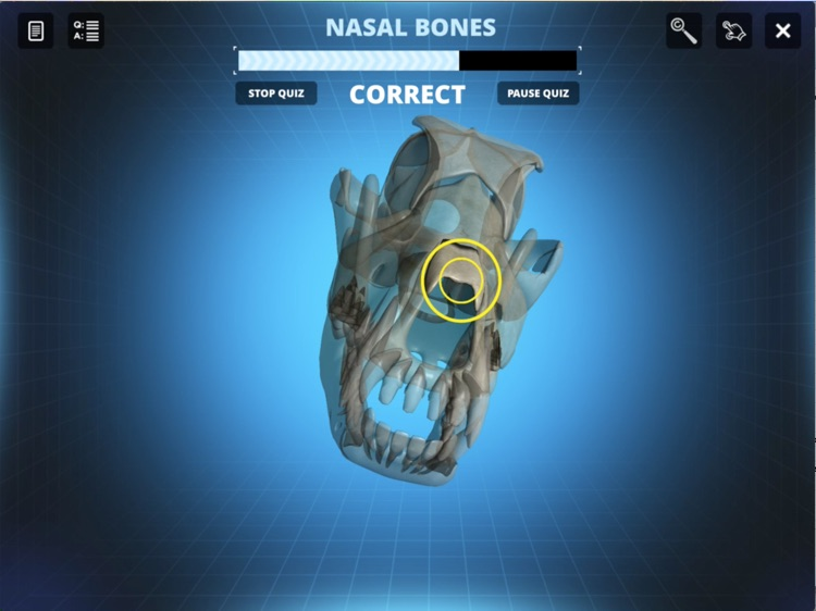 Bone Viewer - Dog Skull