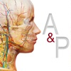 Anatomy & Physiology Reviews