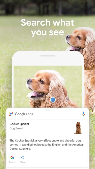 Screenshot of Google App