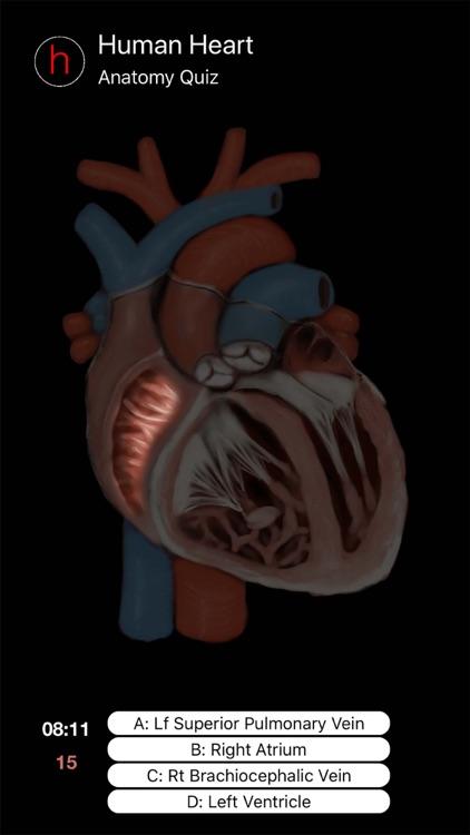 Human Heart Anatomy Quiz