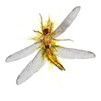 Codes for Flying Bug Smasher Hack