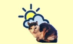 WeatherCatTV