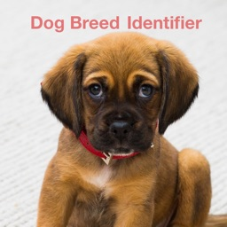 Dog Breed Identify