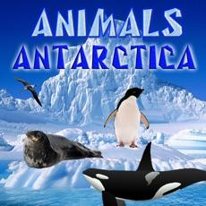 Activities of Animals Antarctica
