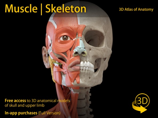 Muscle | Skeleton - 3D Anatomy | App Price Drops