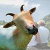 Goat stickers – foto editor stickers di capra