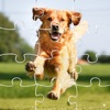 Kids Games Learn Puppy Patrol Jigsaw Puzzles Reviews