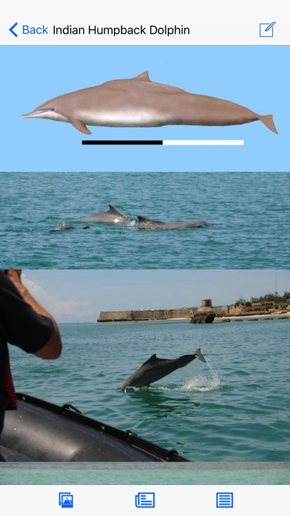Dolphins and Whales World Sightings Guide