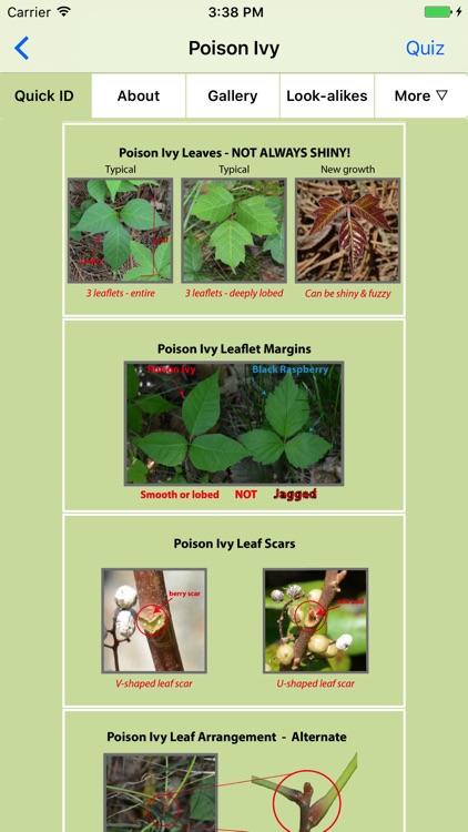 Rash Plants