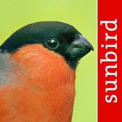 Vogel Id - Garten Vögel Deutschlands bestimmen