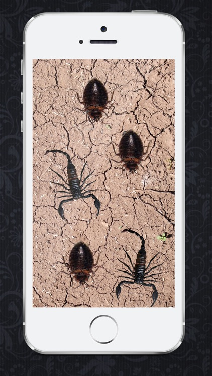 Smasher insects HD