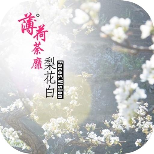 晋江文学推荐好书—【薄荷荼蘼梨花白】