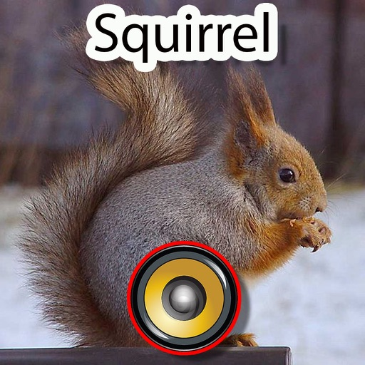 Real Squirrel Hunting Calls & Sounds