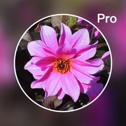 Photo Blur Editor Pro - Touch Blur Effects &Mosaic