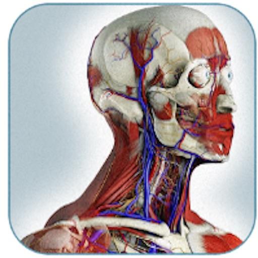 Grays Anatomy Atlas Human By Chuc Do