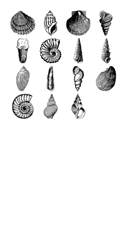Seashell Stickers!