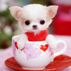 Lovely Dogs & Little Puppies Wallpapers in HD Free
