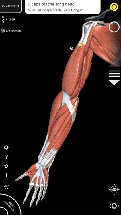 Muscle | Skeleton - 3D Atlas of Anatomy screenshot-3