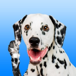 Dalmation Love - Stickers & Keyboard For Dogs
