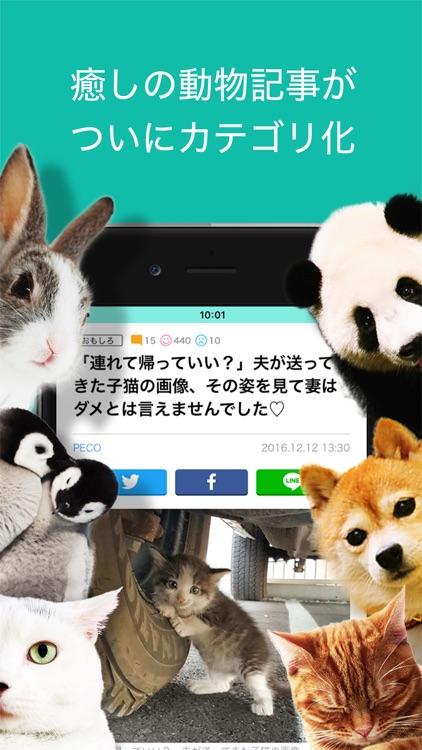 ネタりか screenshot-2